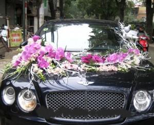 Xe hoa cưới bằng hồ điệp
