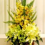 Một số mẫu hoa lan đẹp