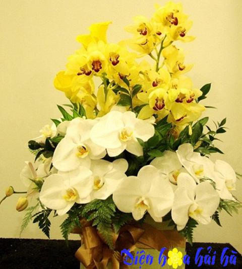 Giỏ hoa hồ điệp và địa lan sang trọng