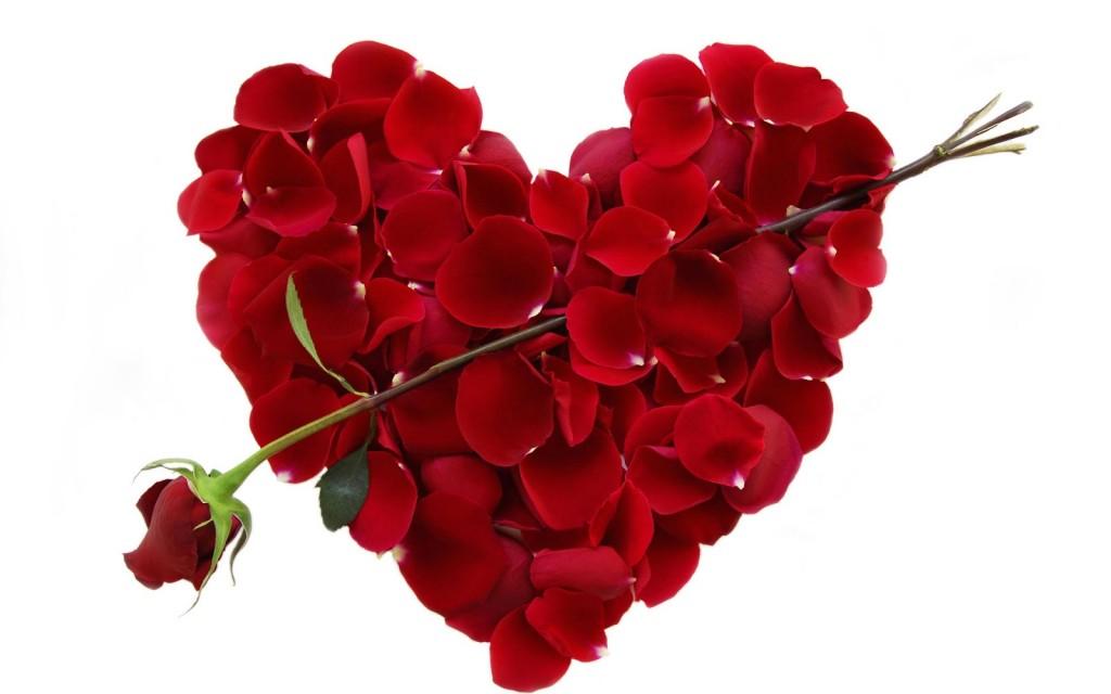 Hoa hồng ngày Valentine