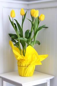 hoa tuylip vang