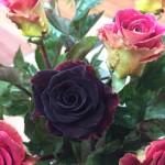 Sự tích hoa hồng đen huyền bí