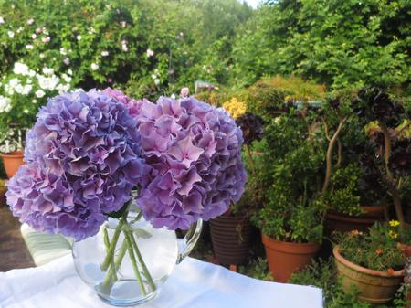 Hoa cẩm tú cầu 1- hoa đẹp 6