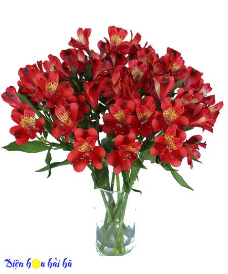 Bình hoa lily Peru mầu đỏ