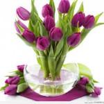 Cách chọn và chăm sóc hoa tulip ngày Tết