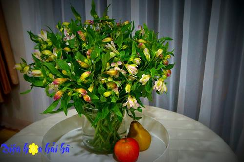 Hoa lily peru - Hoa đẹp