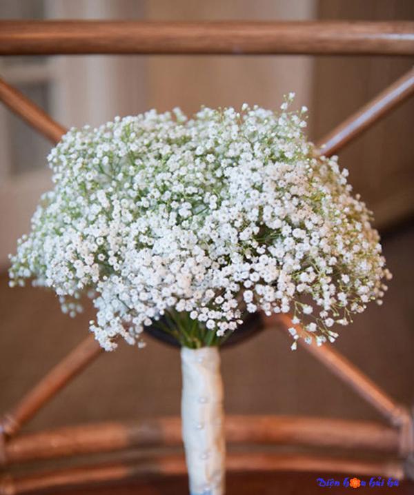 Chuyện tình loài hoa baby trắng - Sự tích ý nghĩa các loài hoa