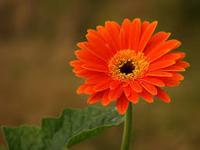 Đoán tính cách người yêu qua loài hoa sinh nhật yêu thích (P2)