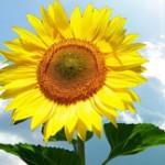 Đoán tính cách người yêu qua loài hoa sinh nhật yêu thích (P1)