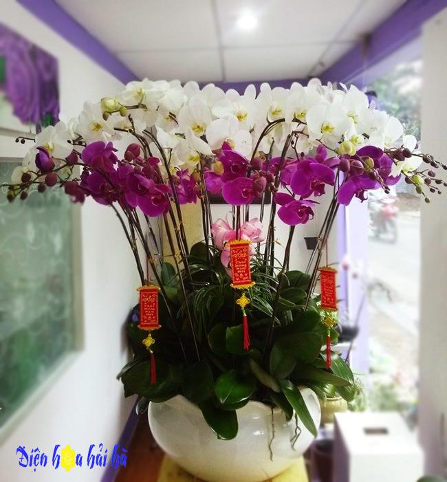 Chậu hoa lan hồ điệp 20 cây trắng tím