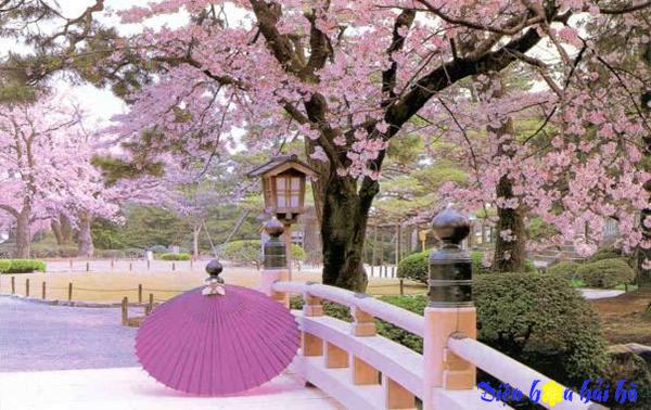 Một số điều kiêng kỵ trong văn hóa tặng hoa Nhật Bản