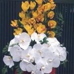 20 mẫu hoa tặng mẹ 20/11 đẹp mê ly