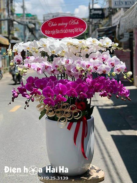 Chậu hoa lan hồ điệp 21 cây